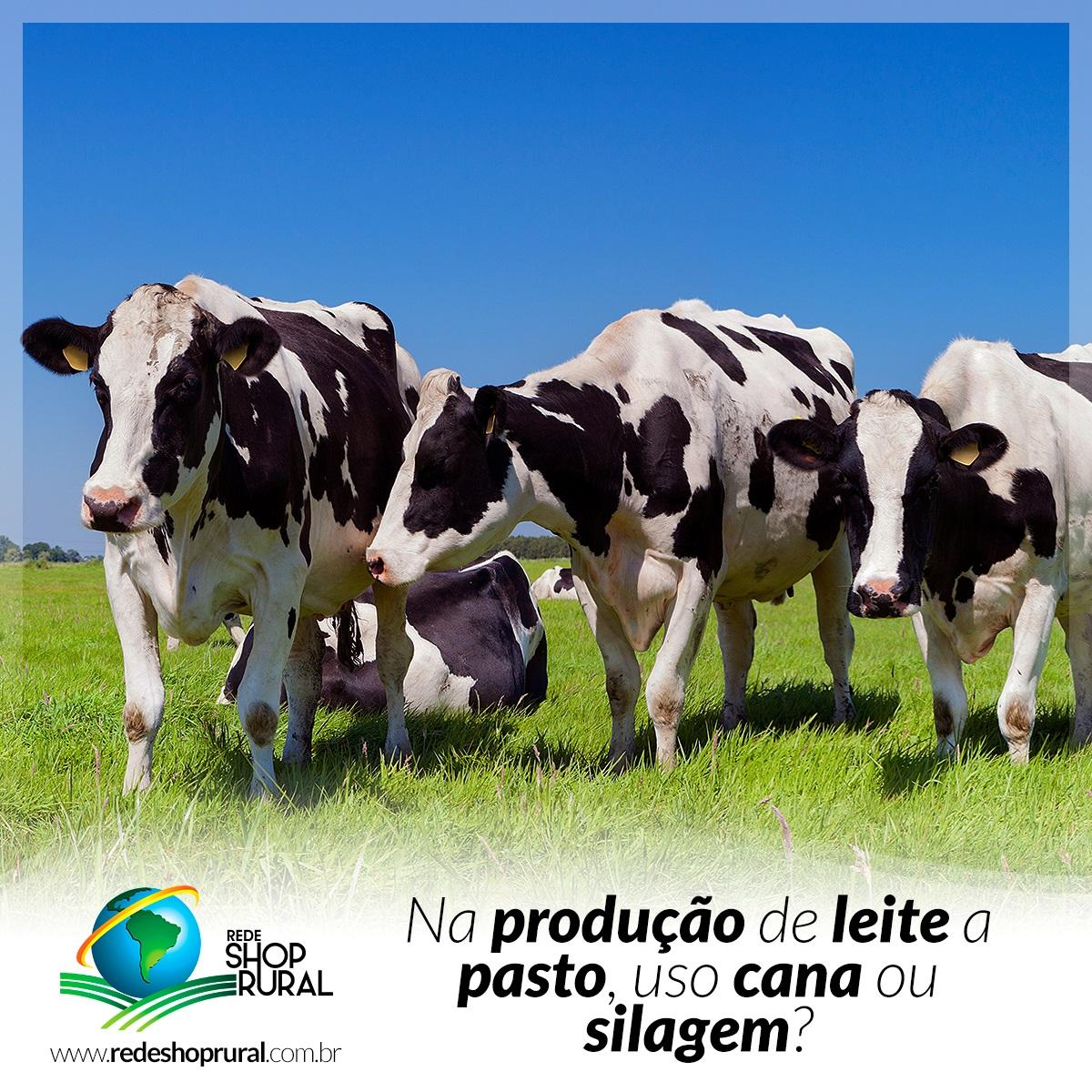 Na produção de Leite a Pasto, uso Cana ou Silagem?