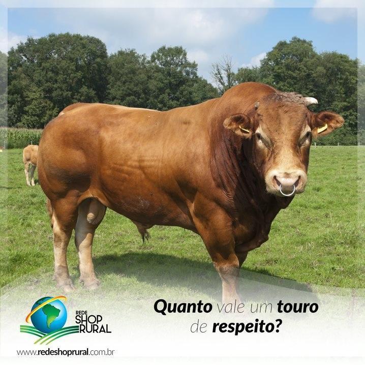 QUANTO VALE UM TOURO DE RESPEITO?