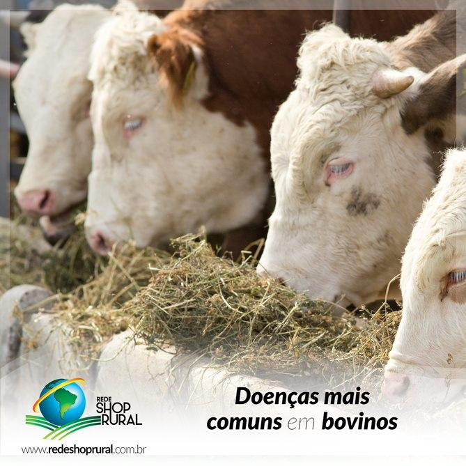 Doenças mais comuns em bovinos