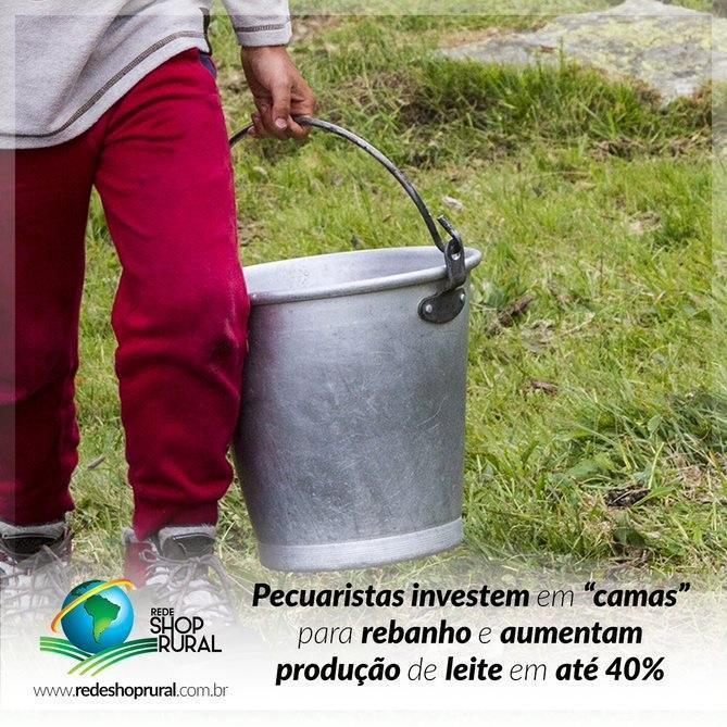 Pecuaristas investem em 'camas' para rebanho e aumentam produção de leite em até 40%