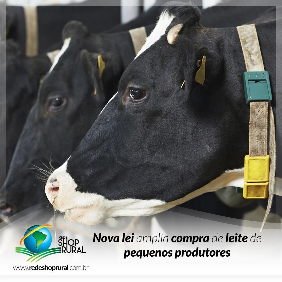 Nova lei amplia compra de leite de pequenos produtores