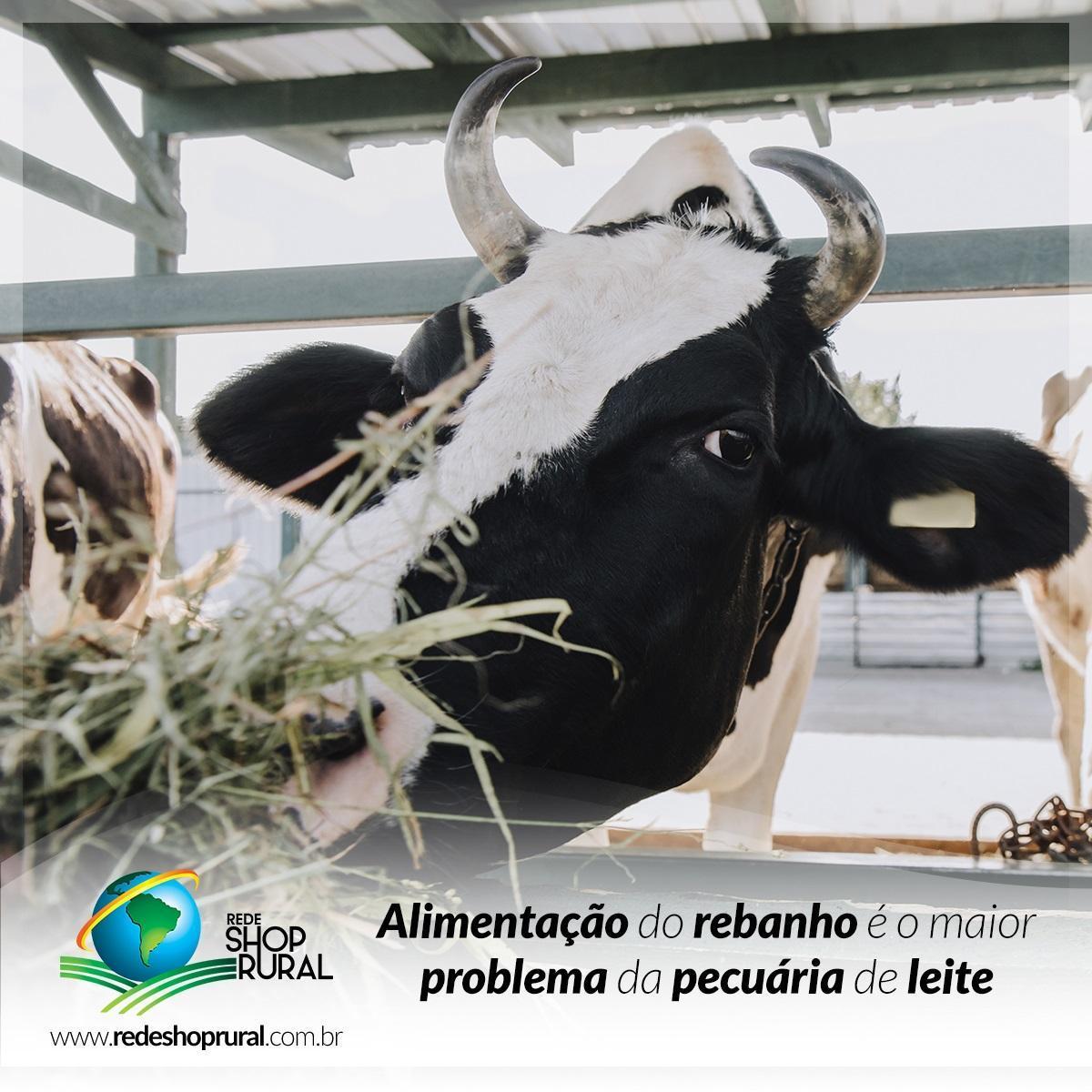 Alimentação do rebanho é o maior problema da pecuária de leite