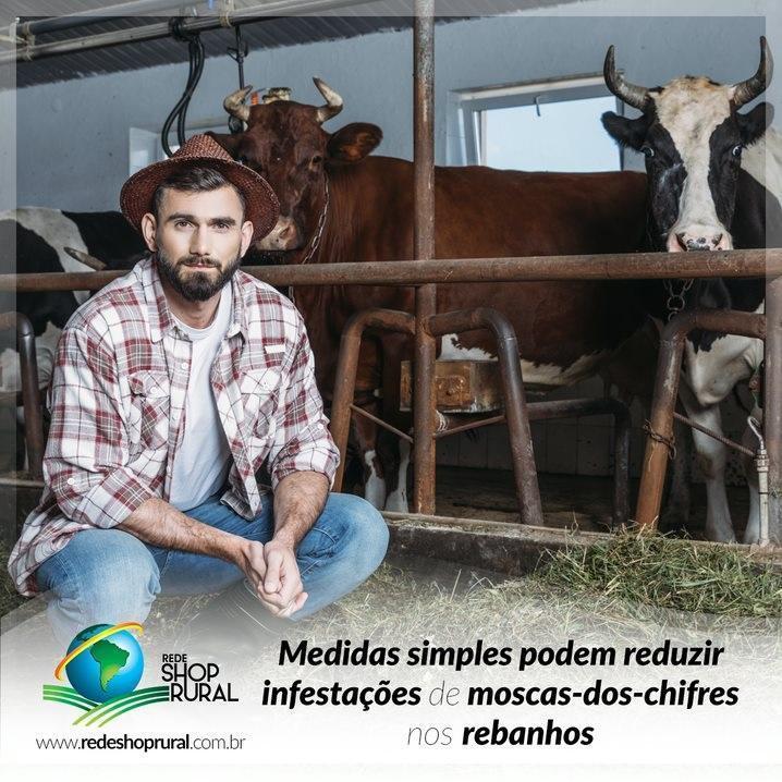 Medidas simples podem reduzir infestações de moscas-dos-chifres nos rebanhos