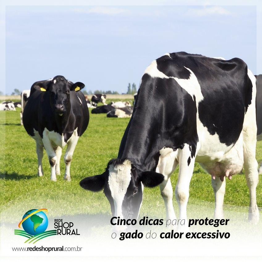 Cinco dicas para proteger o gado do calor excessivo