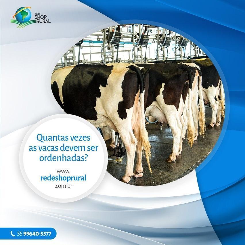 Quantas vezes as vacas devem ser ordenhadas?