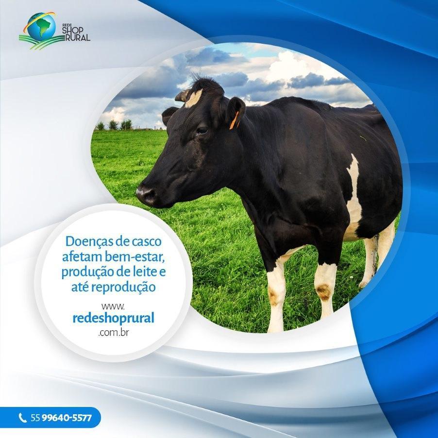 Doenças de casco afetam bem-estar, produção de leite e até reprodução
