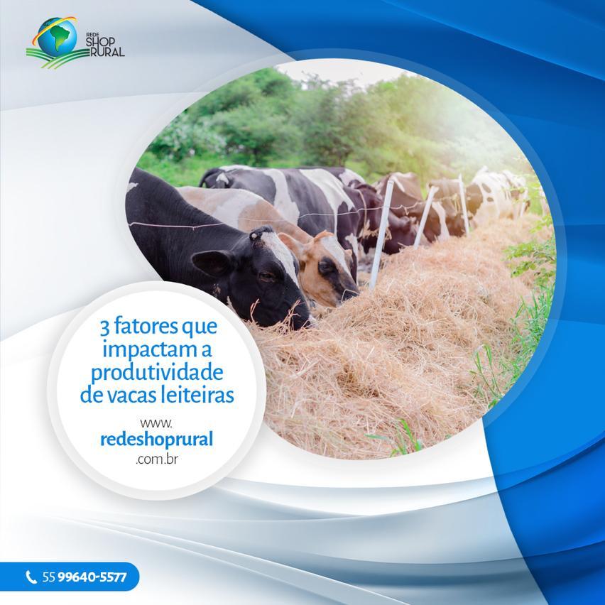 3 fatores que impactam a produtividade de vacas leiteiras