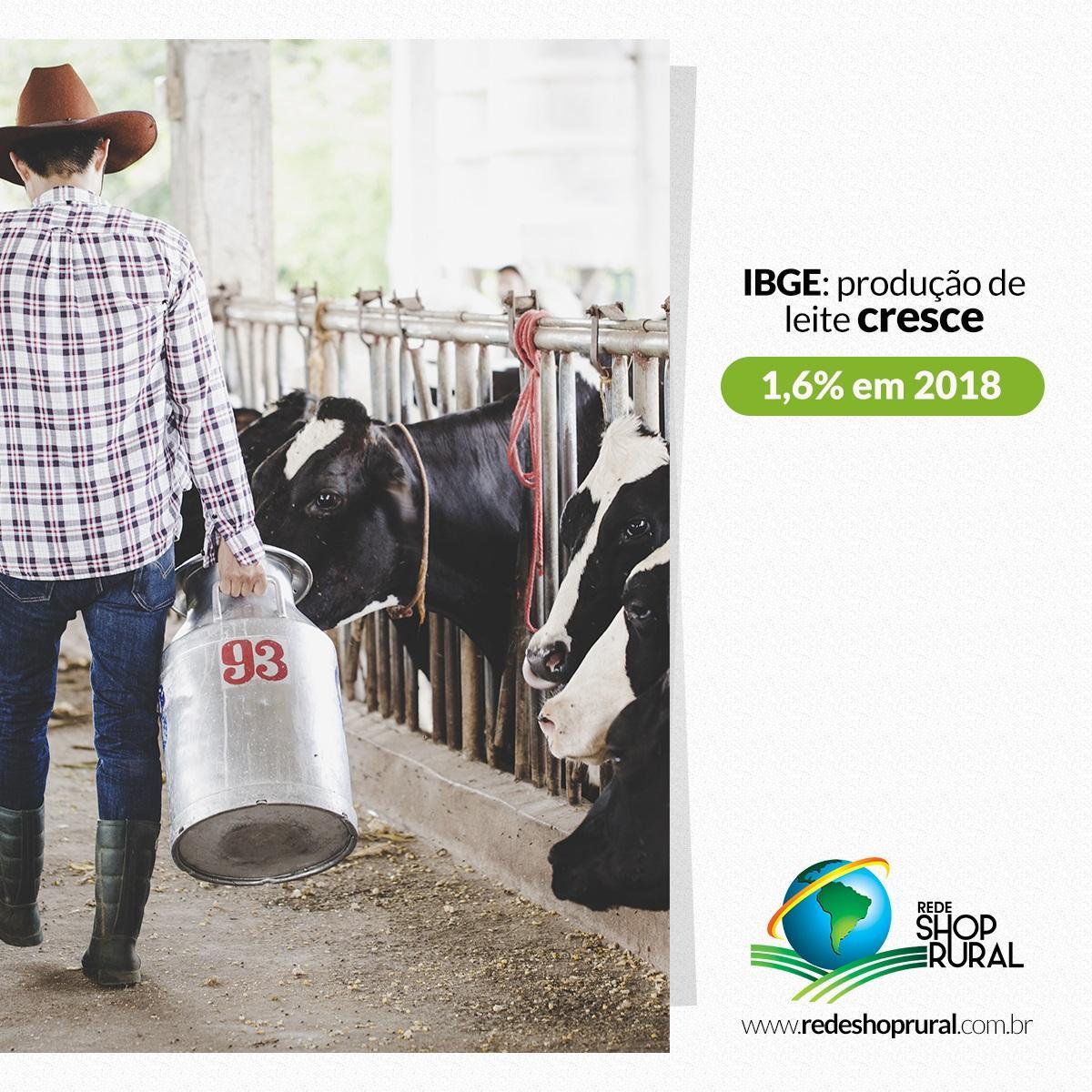 IBGE: produção de leite cresce 1,6% em 2018 e produtividade por vaca aumenta quase 5%