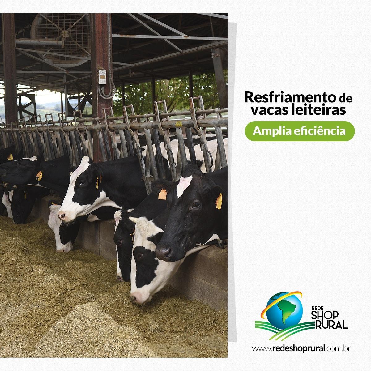 Resfriamento de vacas leiteiras amplia eficiência