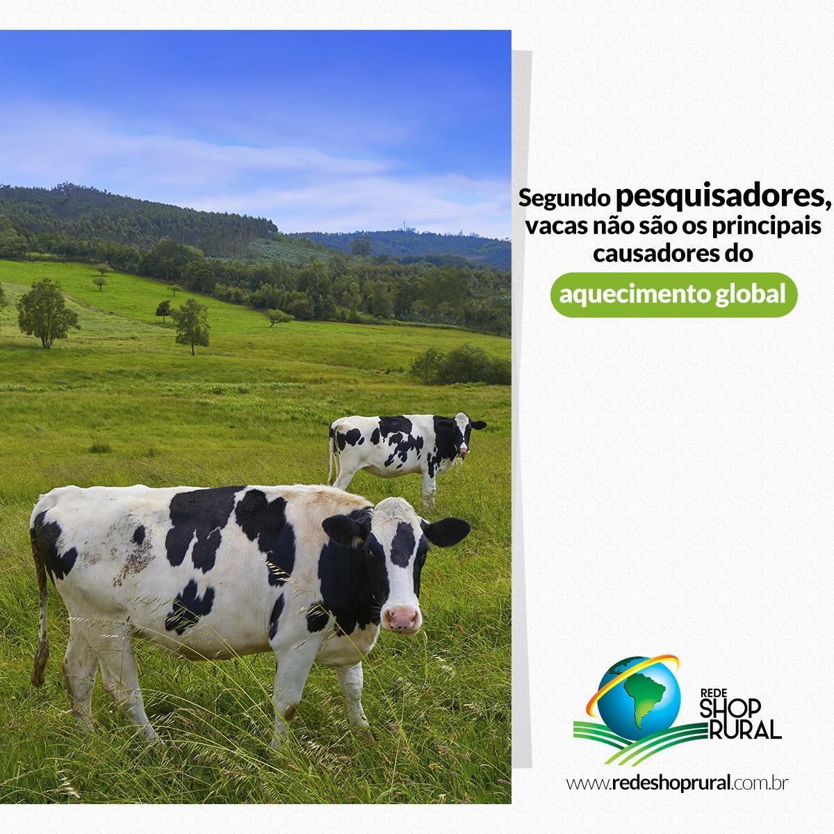Segundo pesquisadores, vacas não são os principais causadores do aquecimento global